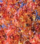 fall_460x470_c_washington_blade